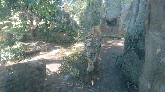 Zoologischer Garten Leipzig: PHOTO_20160830_153813_large.jpg
