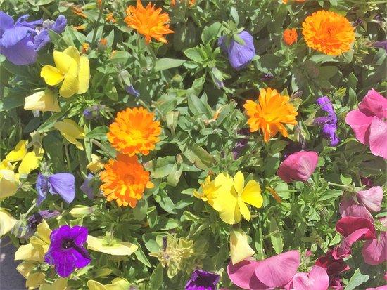 Tabernash, CO: Flowers outside