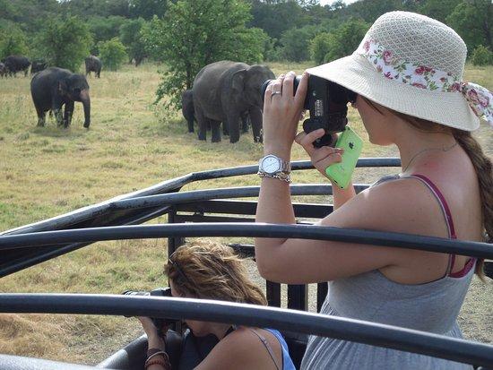 Χαμπαράνα, Σρι Λάνκα: travel with www.royalislandtour@gmail.com