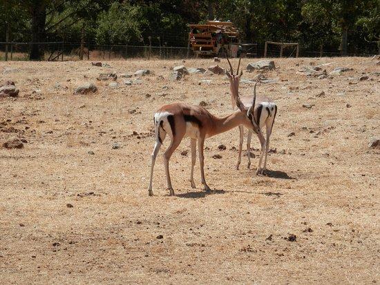 Safari West: safari