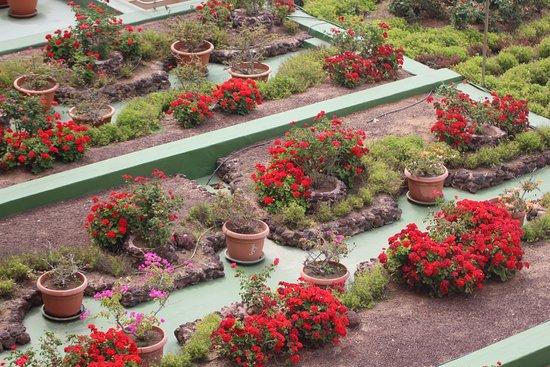 Hotel Reina Isabel: Dettaglio del giardino esterno visto dalla nostra camera