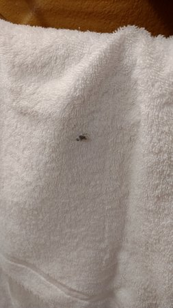 Extended Stay America - Durham - Research Triangle Park - Hwy 55: What's on that towel?