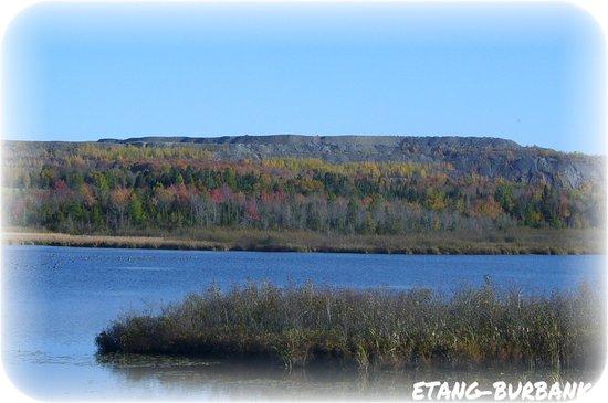 Danville, Canada: Les couleurs sont magnifiques a voir l automne et voir l étang se confondre dans la verdure.