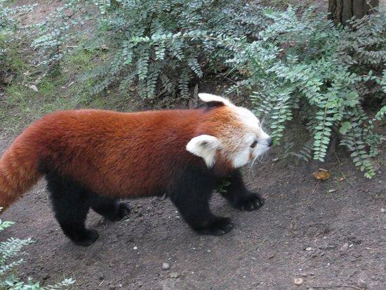 Zoo Duisburg: IMG_6332_large.jpg
