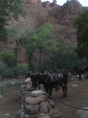 Phantom Ranch: photo2.jpg