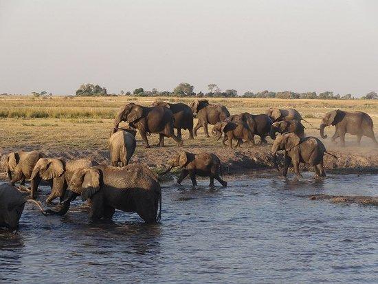 Chobe River Picture Of Kalahari Tours Kasane TripAdvisor - Chobe river