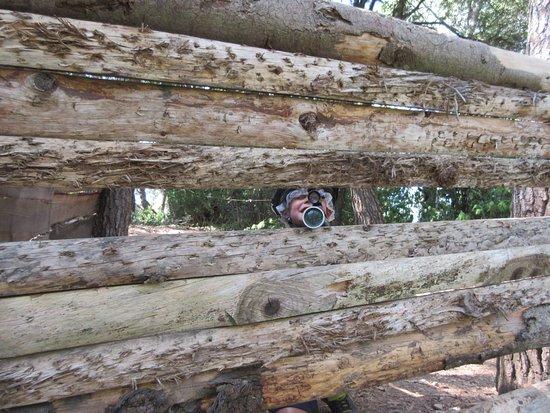 Forest Parc : Laser Game, les enfants adorent