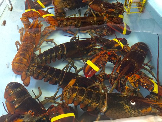 Live Lobsters In Tank Picture Of Capt N Hook S Wells