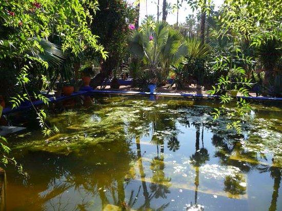Jardin picture of jardin majorelle marrakech tripadvisor for Jardin majorelle