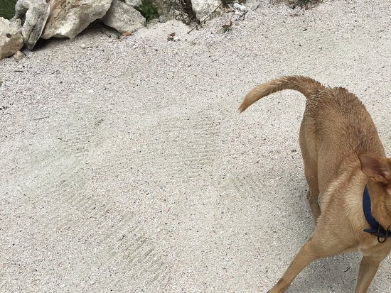 Sandy the swimming dog