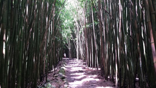 Pipiwai Trail: bamboo forest