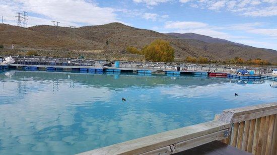 Twizel, Nueva Zelanda: 養殖池