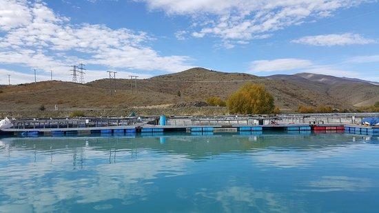 Twizel, Νέα Ζηλανδία: 養殖池