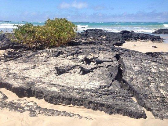 Iguana Crossing: Playa del hotel