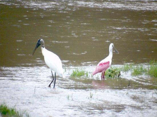 Columbus, Техас: Great birds on the river . . .