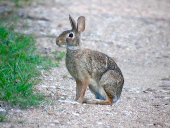 Columbus, Техас: Great wildlife all over!