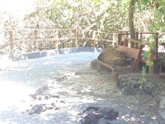 Puerto Villamil, Ecuador: Por el camino lobos marinos