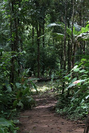 Drake Bay, Costa Rica: sendero en finca del afamilia