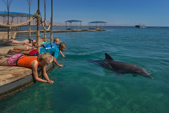 The Dolphin Reef, Eilat