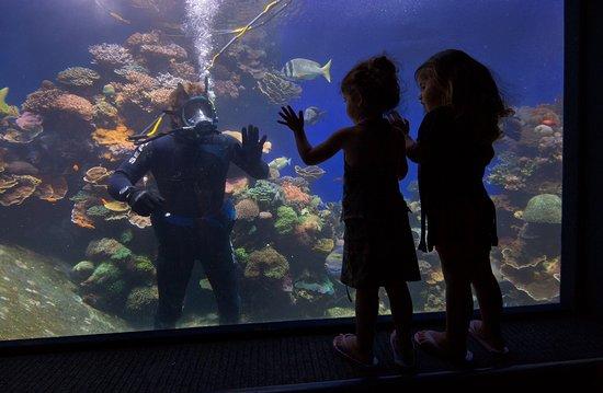 Eilat, Israel: Underwater Observatory Marine Park