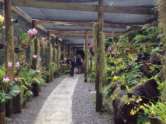 Garden of the Sleeping Giant: The orchid shade house
