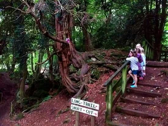 Clearwell, UK: Our children were very excited about finding the fairies in the magical little wood.