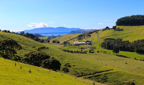 Waiheke-eiland, Nieuw-Zeeland: Scenery along the way to Stonyridge Winery.