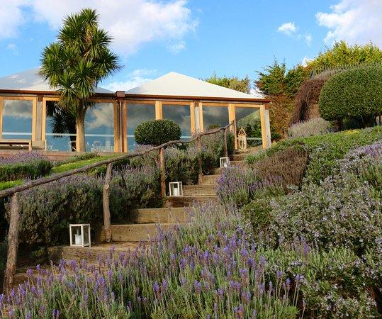 Waiheke Adası, Yeni Zelanda: Lavender gardens around the Mudbrick Restaurant.