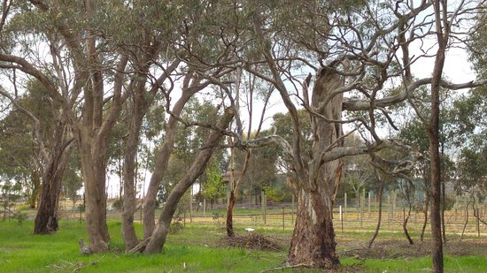 Avoca, Australien: View from the Sunraysia Highway