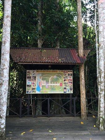 Kinabatangan District, Malasia: photo9.jpg