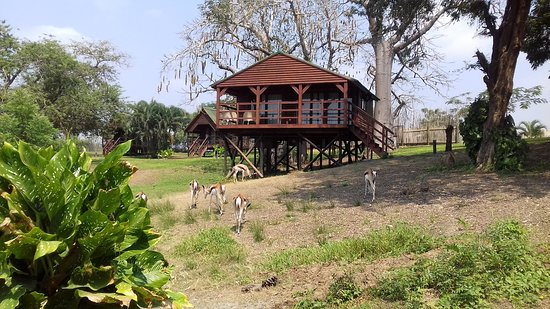 Mubanga Lodge: View of one of the lodges