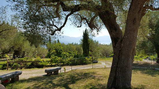 Bosco, Italia: 20160825_100125_large.jpg