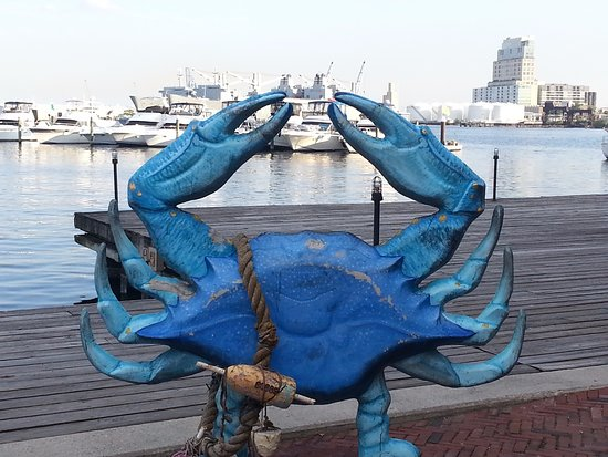 Inn at Henderson's Wharf: Blue Crab at Fells Point