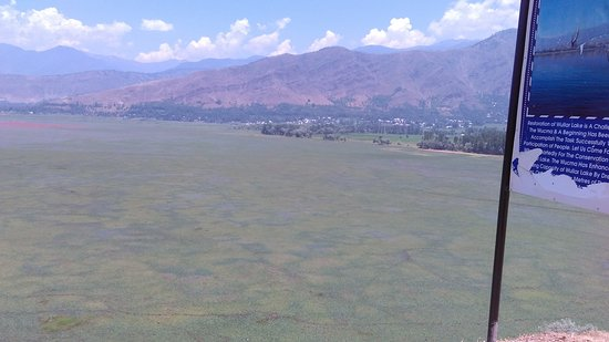 This is actual phot taken at wular lake as you can see there is only green silt which can be see