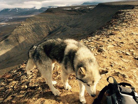 Longyearbyen, Norway: Tuttu - man's best friend (on a hike)