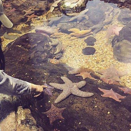 Aquarium of the Bay: Starfish