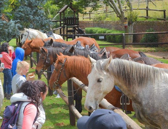 Millstream Farm: Guided Horse rides on the 400 hectare estate from 09h30 daily,booking essential inquire at Recep