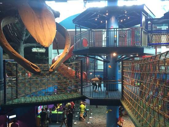 The New Playground Picture Of Ripley 39 S Aquarium Of The