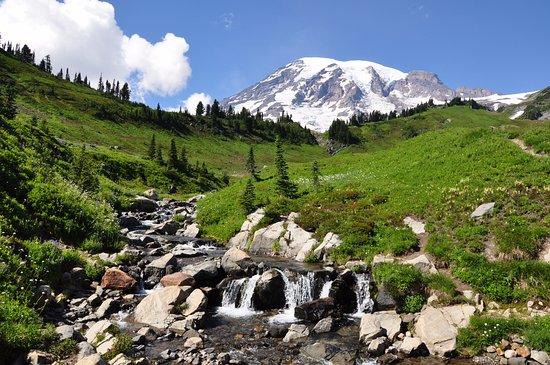 Mount Rainier: mount ranier