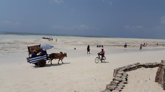 Dream of Zanzibar Photo