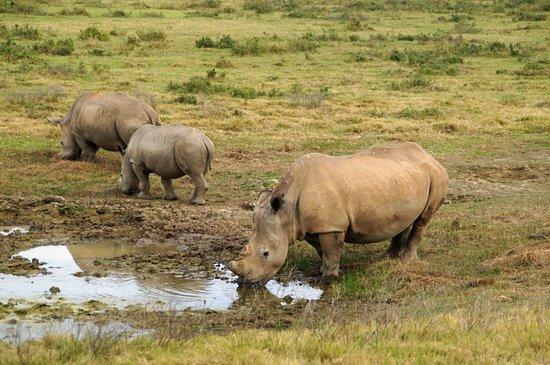 Kenton-on-Sea, Republika Południowej Afryki: Rhinos