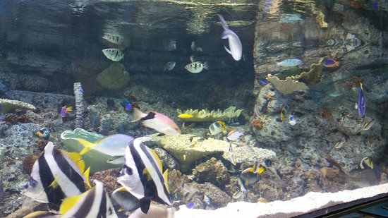 Giselle's Aquarium : walgreenHD1471797550349_large.jpg - Aquarium of the Pacific, Long ...
