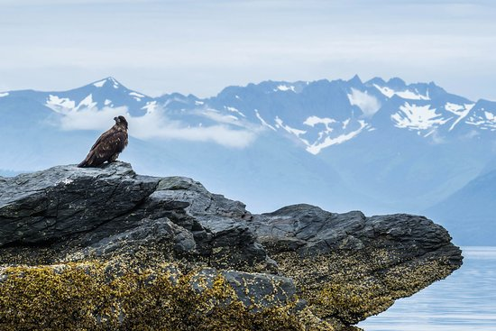 Kodiak National Wildlife Refuge Image