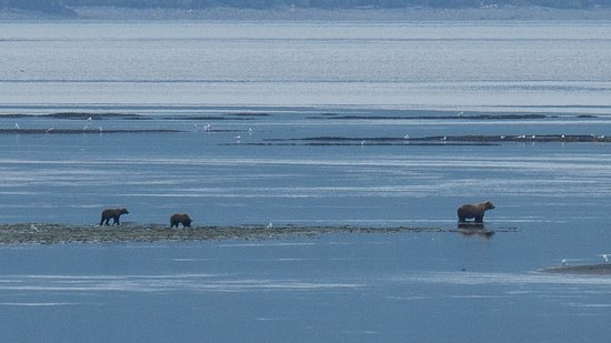 Kodiak National Wildlife Refuge, AK: Mother and her 2 cubs