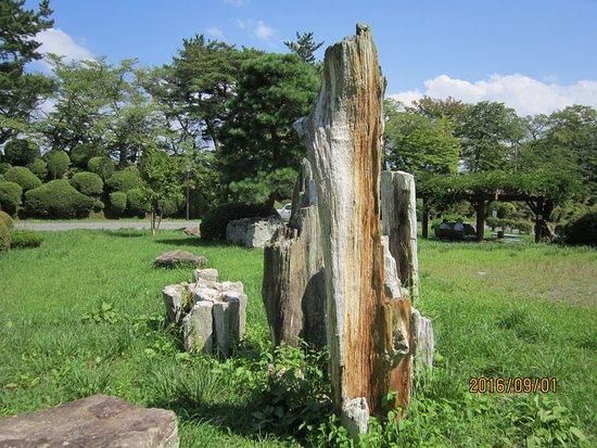 Tanagura-machi, Jepang: 城址の真ん中に化石があります