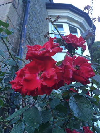 The Hill House: Roses in the garden.