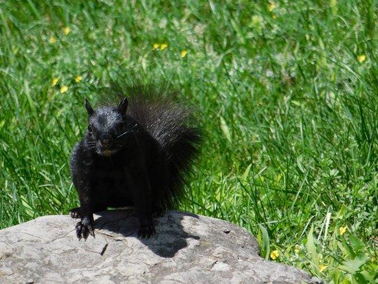 Оттава, Канада: Para los amantes de los animales (como yo)