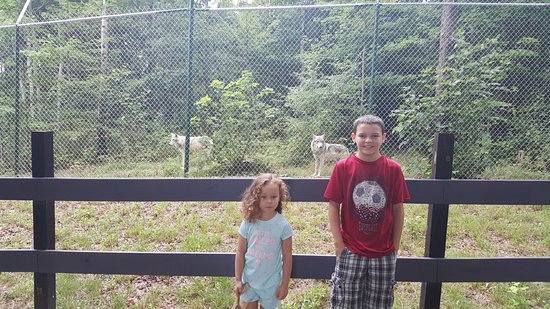 Smyrna, NY: Grandchildren with 2 wolves in 9 acres enclosure