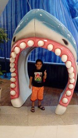 Duque de Caxias, RJ: Olha o tubarão!!!!