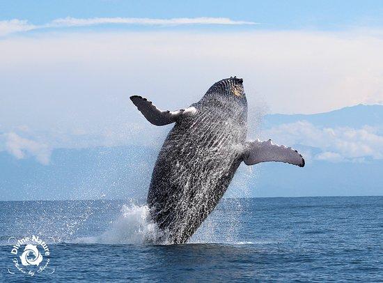 Drake Bay, Costa Rica: Celebrating Whale Season!